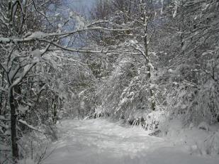 Camino de San Vito
