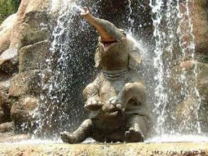 elefante macho adolescente